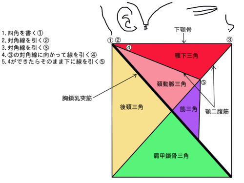 阿波清五郎の解剖学語呂合わせ | 鹿野 俊一 ...