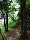 徳島 弁財天厳島神社